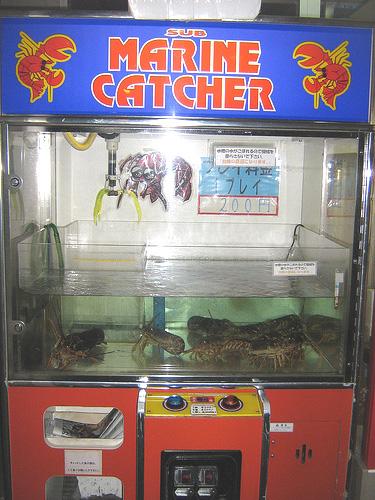 Venta de langostas vivas en una máquina expendedora